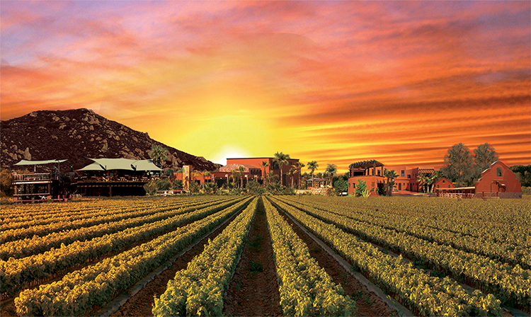 Mexico's blossoming wine region